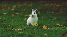 Les lapins sont-ils fait pour vivre en cage ?